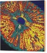 UFO Wood Print