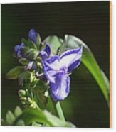 Ultra Violet Wildflower Wood Print