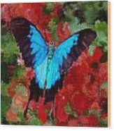Ulysses Butterfly Wood Print