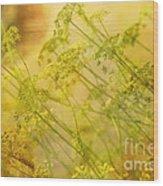 Umbels With Bokeh Wood Print