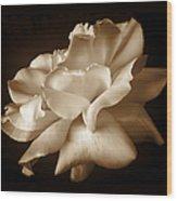Umber Rose Floral Petals Wood Print