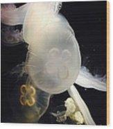 Umbrella Jellyfish 1 Shot At Long Beach California Aquarium By Richard W Linford Wood Print