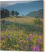 Umbria Wildflowers Wood Print