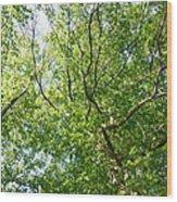 Under Leaf Canopy Wood Print