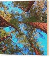 Under The Australian Pines Wood Print