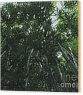 Under The Bamboo Haleakala National Park  Wood Print