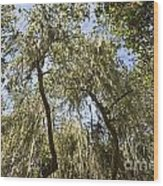 Under The Canopy - The Magical And Mysterious Trees Of The Los Osos Oak Reserve Wood Print