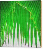 Under The Fan Palm Wood Print
