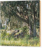 Under The Live Oak Tree Wood Print