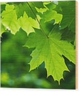 Under The Maple Leaves - Featured 2 Wood Print
