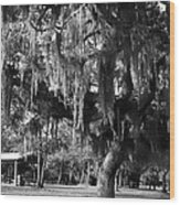 Under The Oaks Wood Print