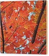 Under The Orange Maple Tree Wood Print by Rona Black