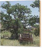 Under The Shade Tree Wood Print