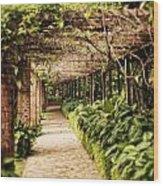 Under The Vine  Wood Print