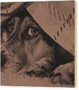 Undercover Hound Wood Print