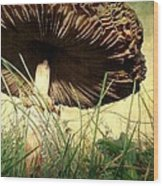 Underneath The Mushroom Wood Print