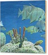Underwater Beauty Wood Print