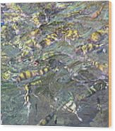 Underwater - Long Boat Tour - Phi Phi Island - 011325 Wood Print