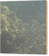 Underwater - Long Boat Tour - Phi Phi Island - 011338 Wood Print