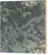 Underwater - Long Boat Tour - Phi Phi Island - 011356 Wood Print