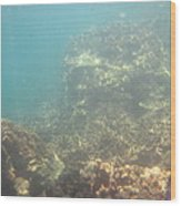 Underwater - Long Boat Tour - Phi Phi Island - 011381 Wood Print by DC Photographer