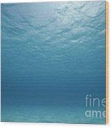 Underwater Scene. Wood Print