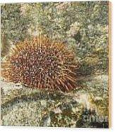 Underwater Shot Of Sea Urchin On Submerged Rocks Wood Print
