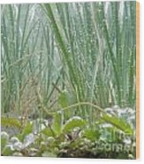 Underwater Shot Of Submerged Grass And Plants Wood Print