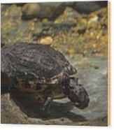 Underwater Turtle Wood Print