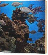 Underwater View Wood Print
