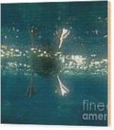 Underwater View Of Duck's Webbed Feet Wood Print