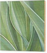 Unfolding Tulip Leaves Wood Print