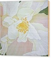 Unfurling White Hibiscus Wood Print