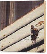 Unidentified Butterfly  Wood Print