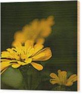 Unidentified Yellow Flower Wood Print