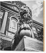 University Of Cincinnati Lion Black And White Picture Wood Print