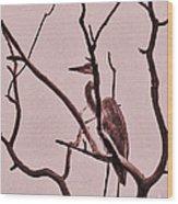 Unknown Bird Wood Print