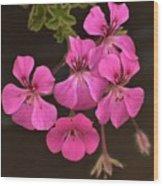 Pink Geranium Flower Wood Print