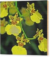 unnamed hybrid Orchid  Wood Print