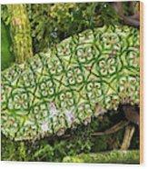 Unripe Anthurium Fruit Wood Print