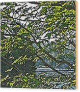 Untamed Wood Print