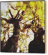 Untitled-twin Trees Wood Print