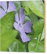 Unusual Purple Flower Perspective Wood Print