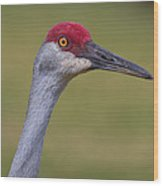 Up Close With A Sandhill Crane Wood Print