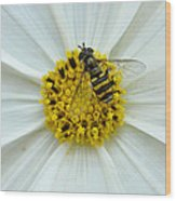 Up Close With The Bee And The Cosmo Wood Print