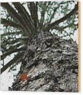 Up Pine Wood Print