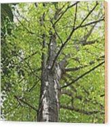 Up The Oak Tree Wood Print