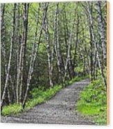 Up The Trail Wood Print