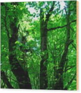 Up Through The Trees Wood Print