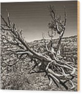 Uprooted - Bryce Canyon Sepia Wood Print